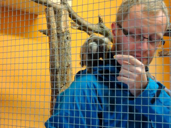 Muž v kleci s opičkou.